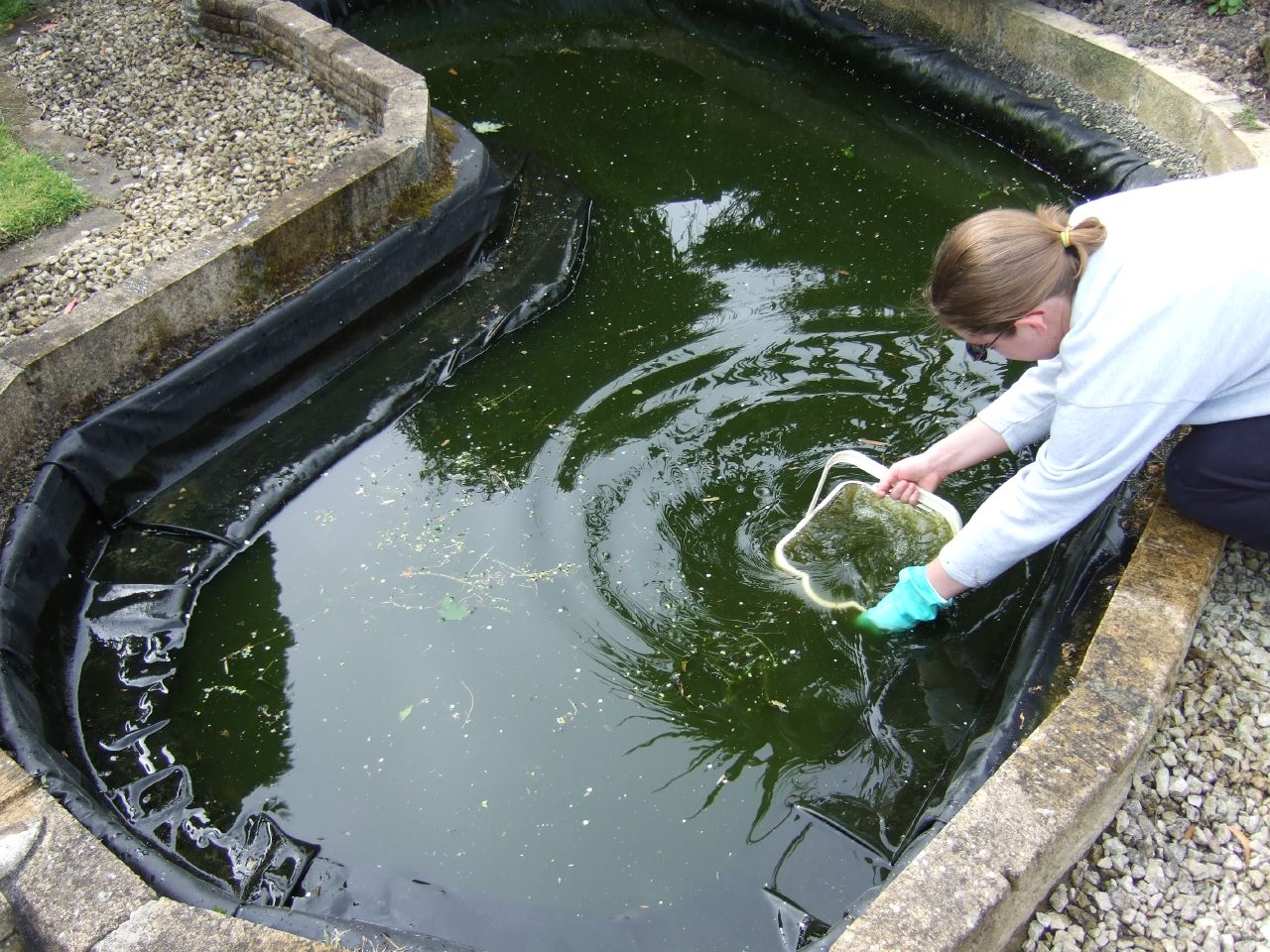 pond-cleaning-process