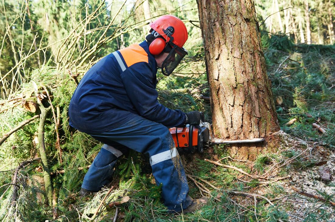 tree-service-available
