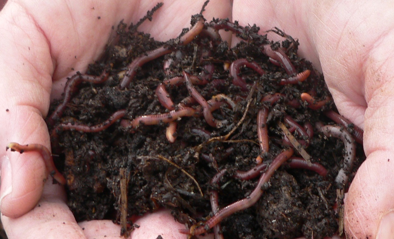 composting worms near me